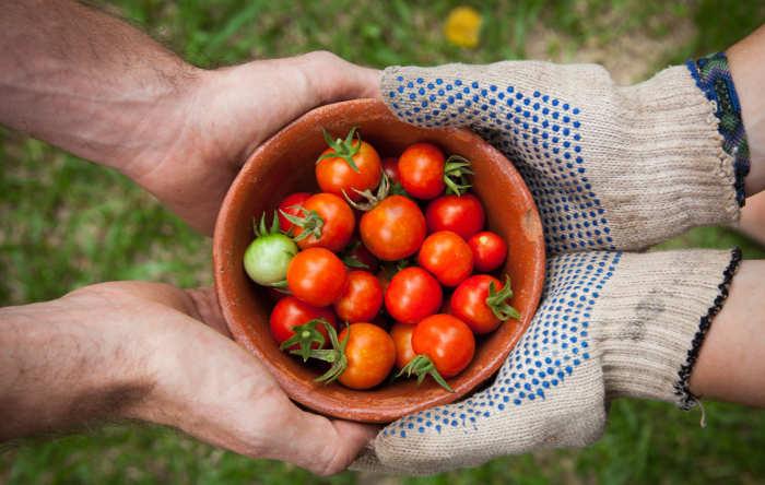 sharing a basket of tomatos