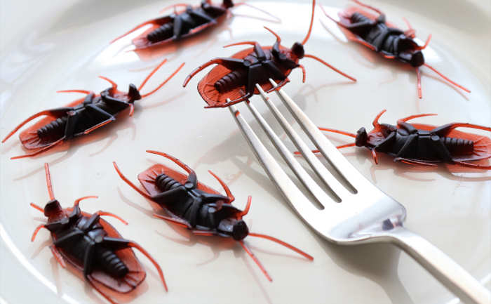 bugs on a plate